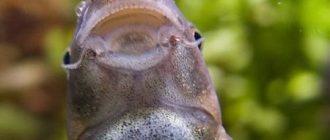 Пилинг рыбками и особенности его проведения в СПА-салонах